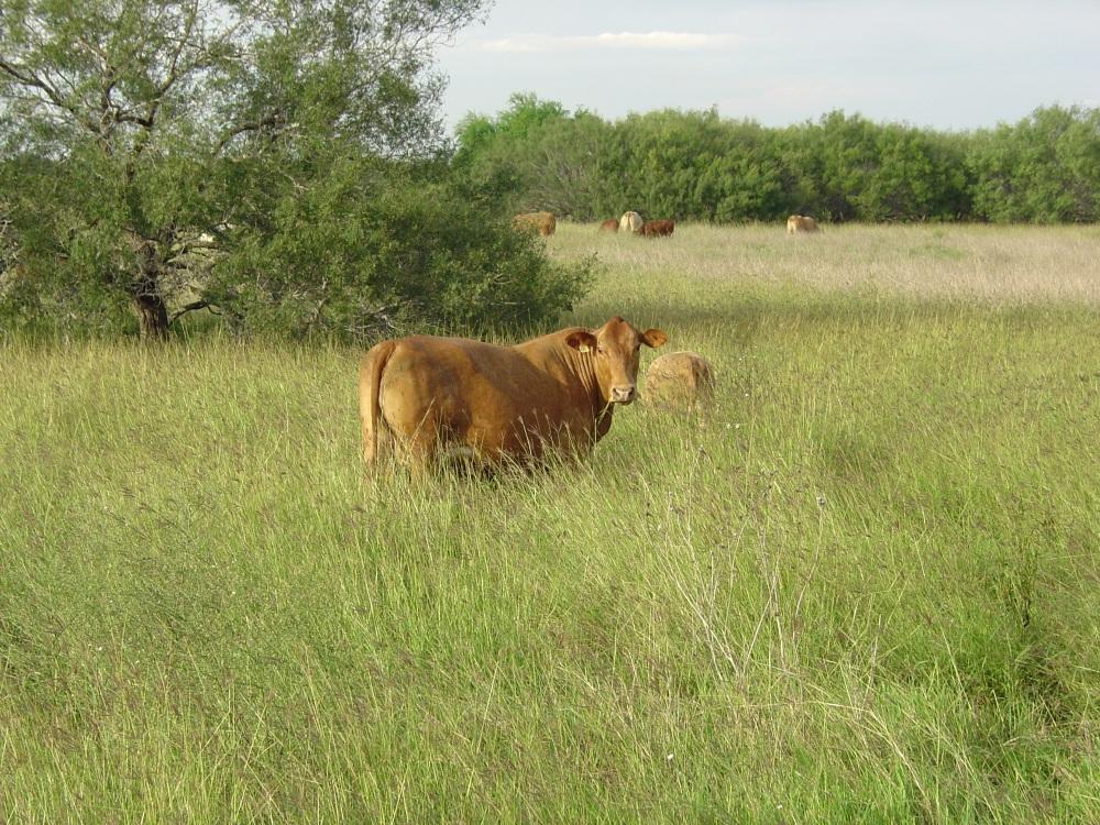 Delta in lush pasture